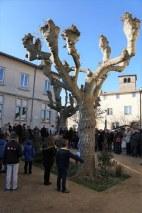Brindas : inauguration de l'arbre de la laïcité